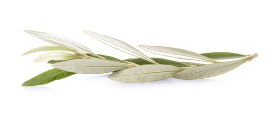 Rama de planta árbol de olivo aislada sobre fondo blanco