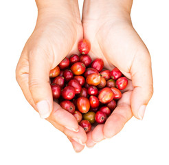 coffee beans in hands on white background