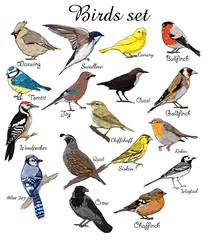 Wall Mural - big set birds. animals, bird silhouette, bird vector