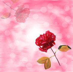 Red rose on branch blurred background greeting card
