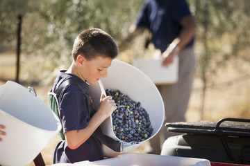 Caucasian boy working in olive grove