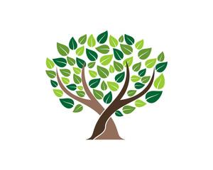 Life Tree Plant