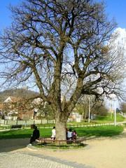 Round bench under tree