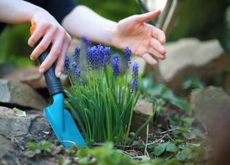 Obraz Sadzenie kwiatów, wiosenne prace w ogrodzie - fototapety do salonu