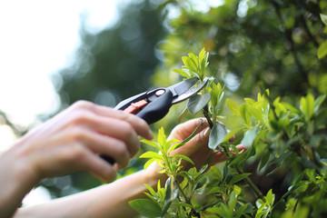 Fototapeta Pielęgnacja roślin w ogrodzie obraz