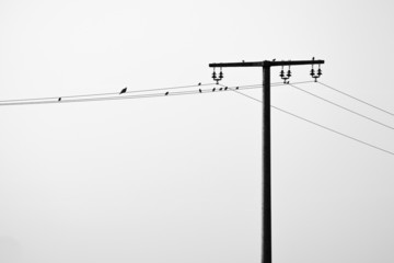 some birds on a overhead powerline