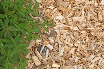 Photos illustrations et vid os de copeaux de bois for Copeaux de bois pour fumoir