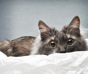 surprised cat in studio background