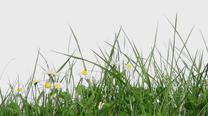 Photos illustrations et vid os de herbe haute for Haute herbe pokemon
