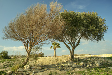 Two trees by the road, one green and other dried