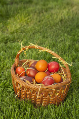 Basket full of colorful Easter eggs at meadow