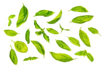 Scattered sweet basil leaves