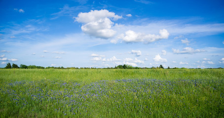 Wildflowers Springtime Horizon Rural Countryside Fluffy Clouds