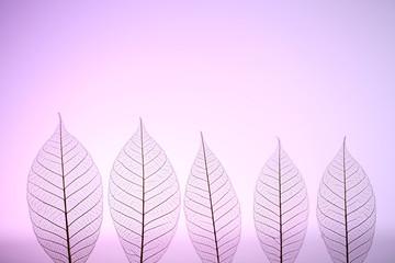 Keuken foto achterwand Decoratief nervenblad Skeleton leaves on purple background, close up