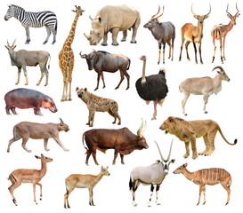 Wall Mural - africa animals