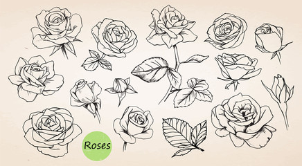 Set of hand drawn roses. Vector