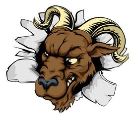 Ram sports mascot breakthrough