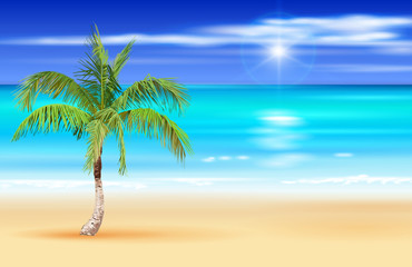 Palm tree on the deserted tropical beach