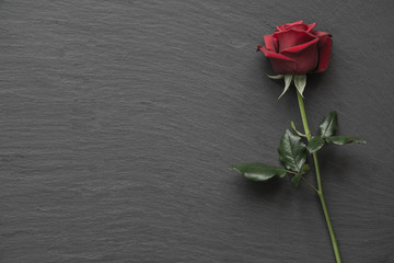 Red roses on empty slate background