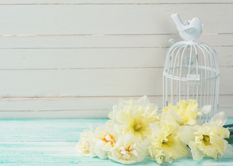 Background with fresh daffodils and bird cage