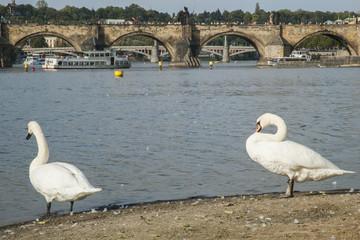 El Puente Carlos visto desde la Isla de Kampa, Praga.