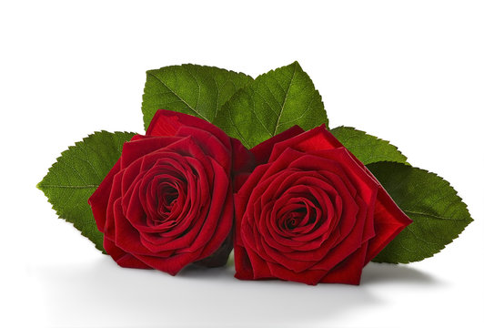Two red roses with green leaves