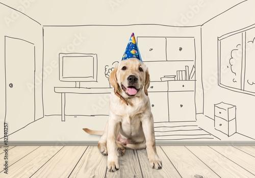 Birthday A Golden Retriever Puppy Wearing Happy Hat