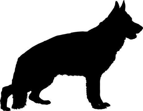 German Shepherd Silhouette with Collar