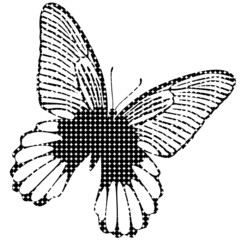 Black butterfly icon