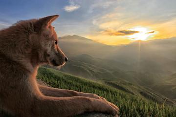 Photo sur Plexiglas Loup Chien loup