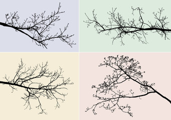 silhouettes of tree branches