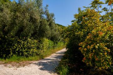 Parco regionale del Conero, Monte Conero, Marche, Italia