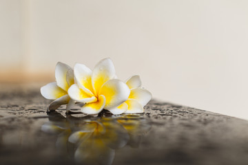 Magnolia flower on wet black background