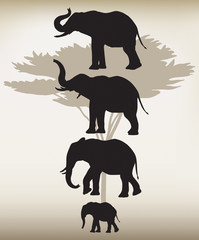 Elephants In Different Poses