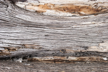 Old Wood Tree Texture Background Pattern closeup