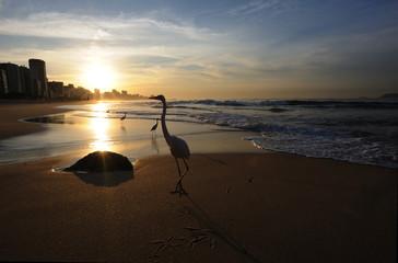 Birds on a sandy beach at sunrise, Rio de Janeiro