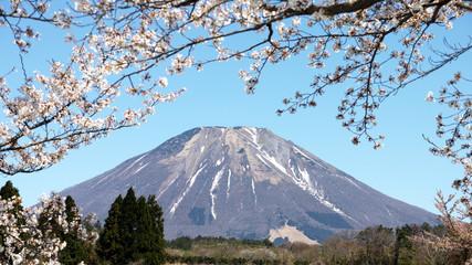 伯耆富士 大山 桜