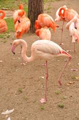 pink flamingo zoo