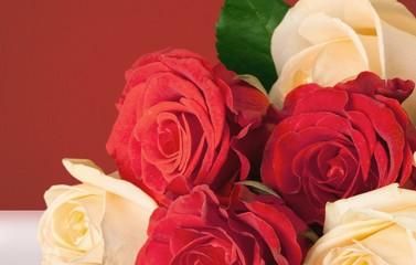 Rose. Roses