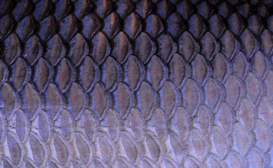 texture of fish scales