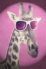 Portrait of a giraffe with hipster sunglasses