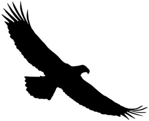 Flying eagle silhouette on a white background