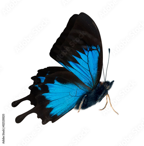 quotside view of bright blue butterflyquot stock photo and