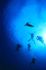 Scuba diving with sea turtle silhouette