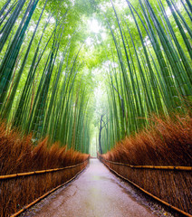 Path to bamboo forest, Arashiyama, Kyoto, Japan.