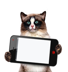 Cat holding a blank smartphone.