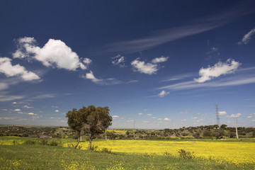 Papiers peints Nature Spring field in Spain with yellow flowers