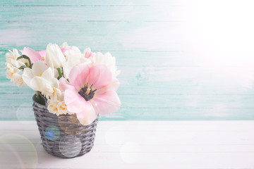 Background with fresh  tulip  and narcissus flowers