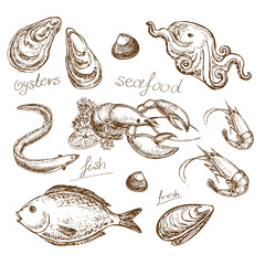 hand drawn illustration seafood