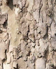 Background of bark